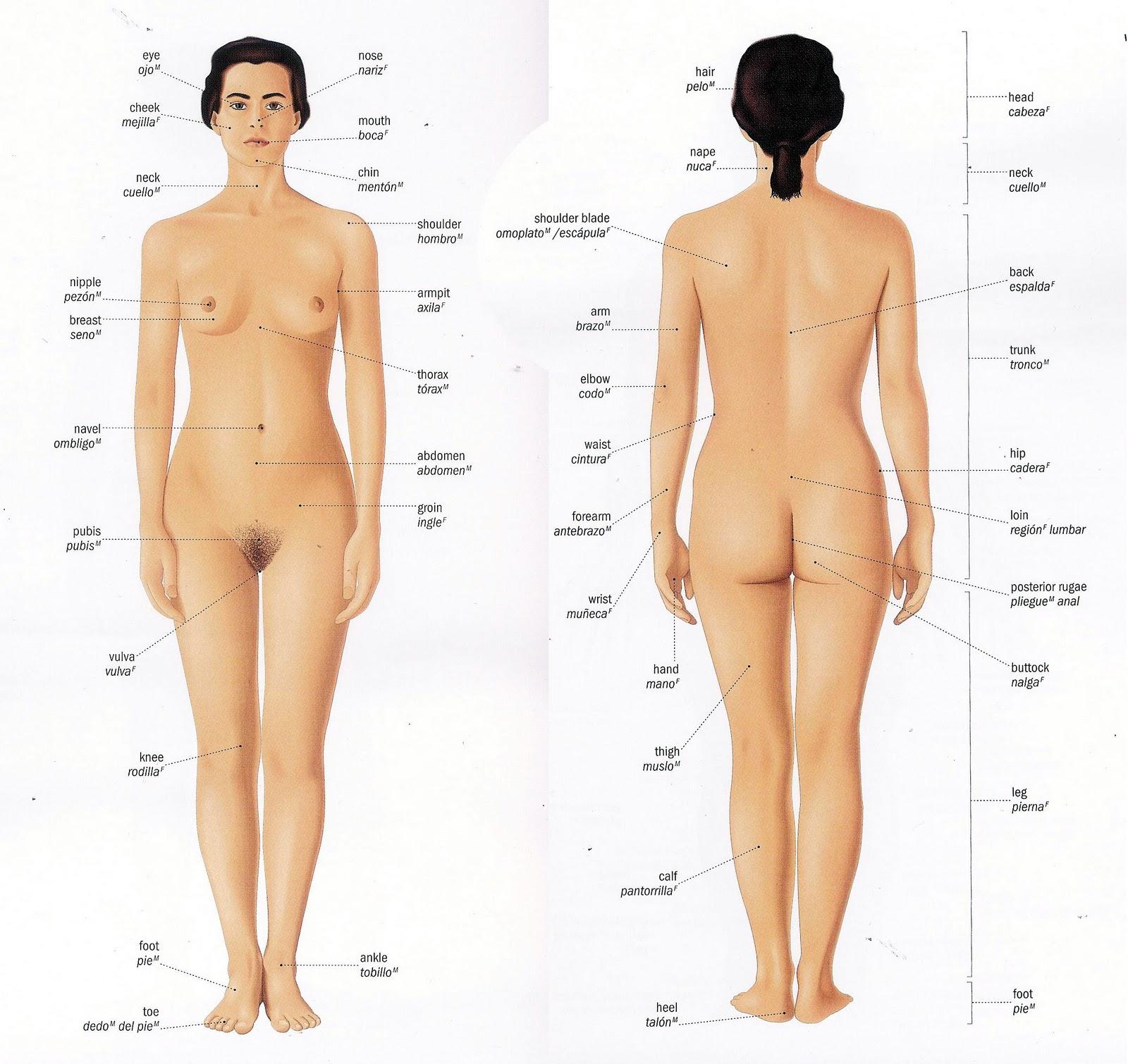 el cuerpo femenino – Red Artes Visuales de Medellín